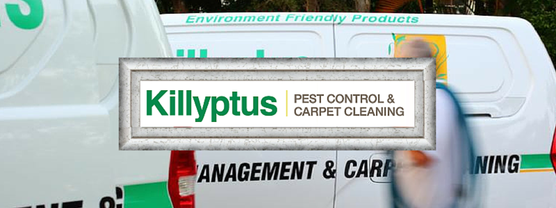 Pest Control Sunshine Coast - Killyptus Pest Control