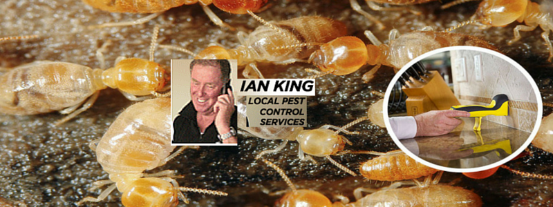 Pest Control Hornsby, NSW - Ian King Local Pest Control