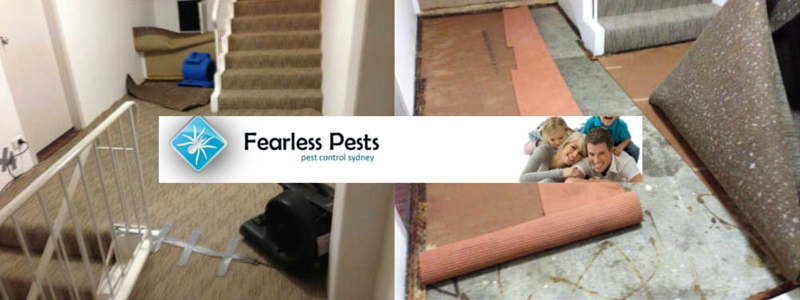 Fearless Pests